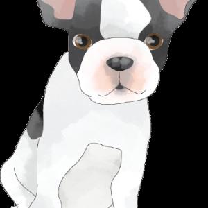 logo-dog-2x